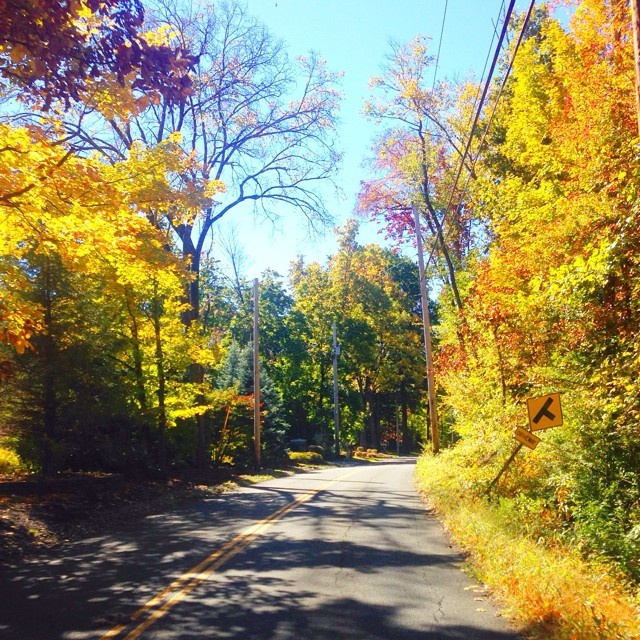 Fall foliage in the hudson valley-- we rented a car this weekend to do a mini road trip and roam around the 'burbs! ?