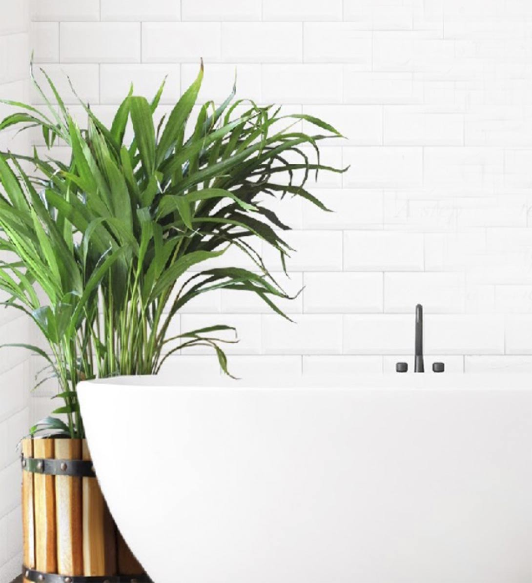 Calming photo of bathtub and plant